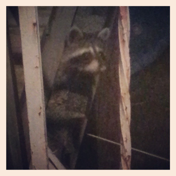 #Backyard #Bandit