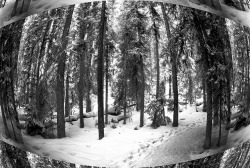 Landscape - Banff National Park - Johnston Canyon17- Infrared - Fisheye by grbrule on Flickr.645 days to go