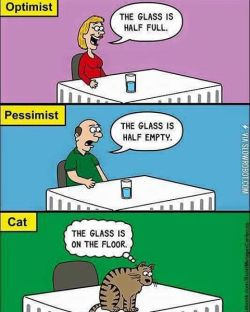 hating-on-cats-optimist-pessimist-cats