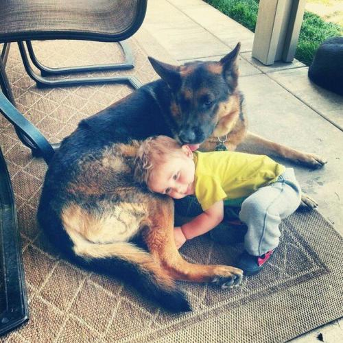 "thefluffingtonpost:  German Shepherd Adopts Human Boy in Landmark Case After nearly a year of court proceedings, a German shepherd named Cody has won the right to adopt a young boy who was displaced from his home in 2011. ""Cody has been caring for the boy for nearly two years, but when he decided to make it official, the adoption agency balked and the courts got involved,"" says Tony Shek, Cody's attorney. ""For starters, he's a single parent. Also, he's a dog."" Until this point, there had been no legal precedent for inter-species adoption of humans. ""It's very hard to make history in the court system. But we proved that Cody provides a loving and financially stable home, and that he is the best caregiver for the boy. Denial of his adoption rights would be tantamount to discrimination. We are thrilled with the outcome."" Legal experts say the decision may have implications for a number of similar cases still pending. Via lions_neice."
