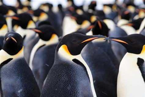 Humans visit and confirm existence of penguin colony (Photo: International Polar Foundation) The existence of a 9,000-strong colony of emperor penguins in East Antarctica has been confirmed by three people who visited it for the first time. Read the complete story.