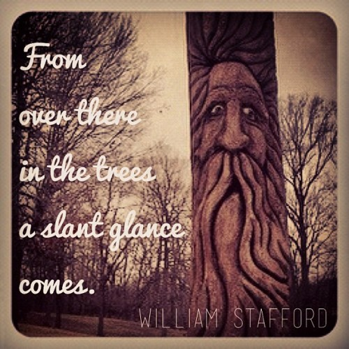 """From over there in the trees a slant glance comes."" William Stafford"