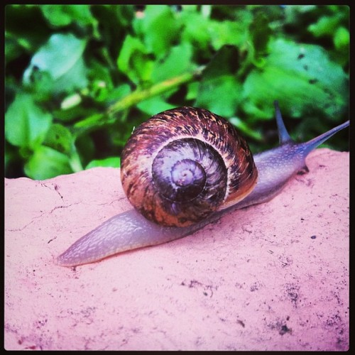 #snail time! Lol Good morning friends :]