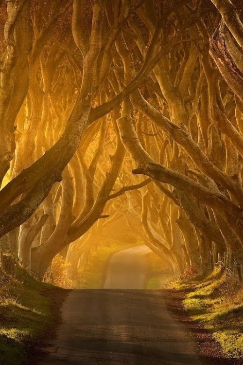 magshatter:  Dark Hedges, Ireland