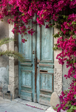 ribbonsinthewind:  What gorgeous bougainvilleas ~