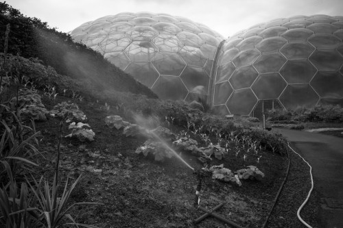 Eden Mist (by Cris Rose)  Camera: Leica M9 Lens: Zeiss 25mm f2.8 Biogon Water sprayed as a fine mist over some plants outside the Eden Project's tropical domes