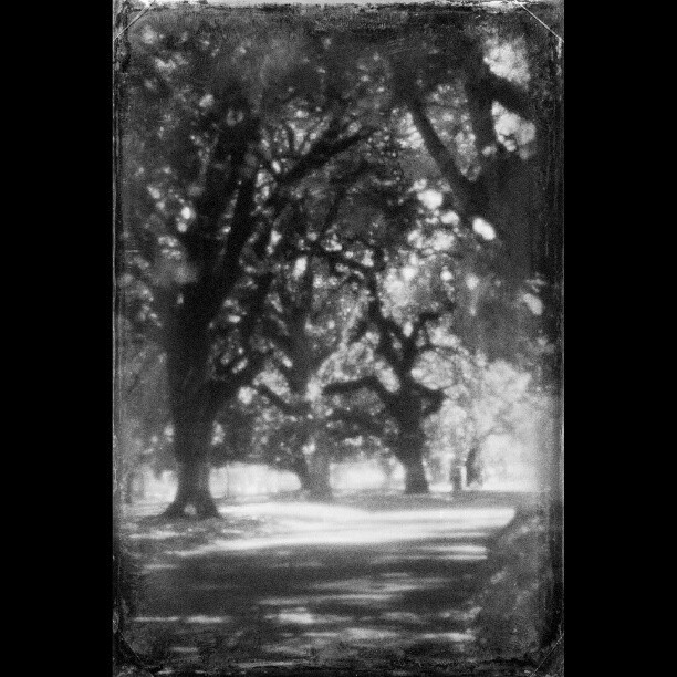 Carlton gardens on a bloody hot day. #pinhole #pinholephotography #vintage #distressed #scratched #carltongardens #melbourne #victoria #australia #texture #canon #1000D #silverefexpro #vintagegoodness (at Paul Sadler Swimland)