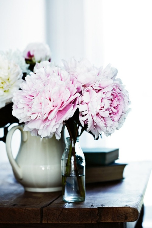 peonies | photo sharyn cairns