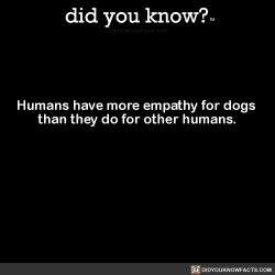 did-you-kno:  Humans have more empathy for dogs than they do for other humans. Source Source 2