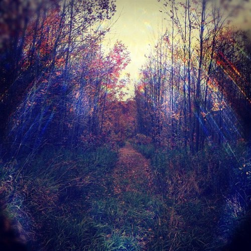 speaksoftwearloud:  forest of endless tree's