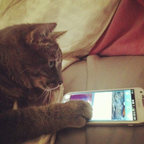 Everyday I'm tumblin #cat #tumblr