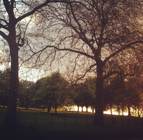 Primrose Hill, before it rained