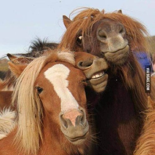 9gag:  Reminds me of drunken girls trying to pose for a photo. 🐴