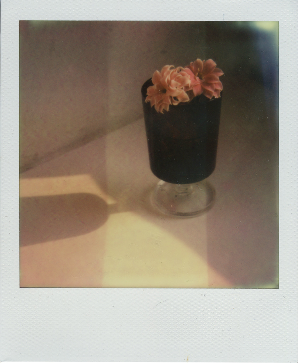 well, yes. why not. Camera. Polaroid SX-70, Film: Impossible Project Px680 Color Protection