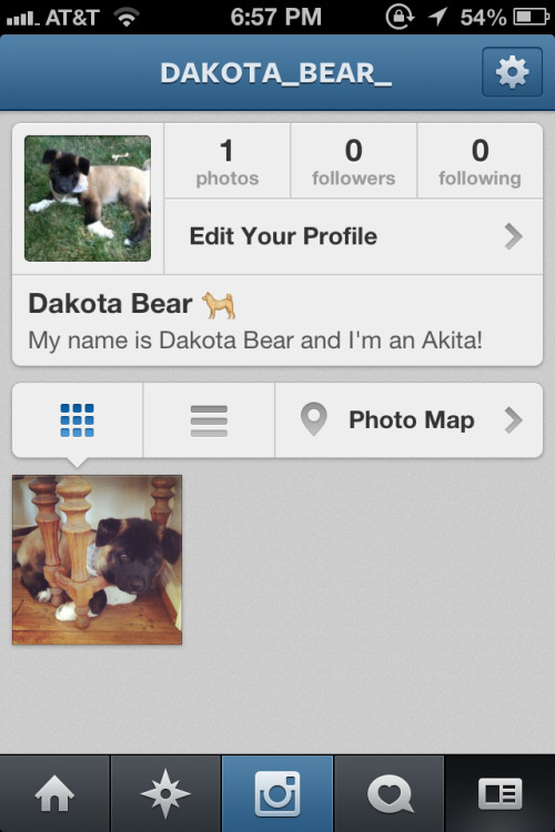 My Akita, Dakota Bear, now has an Instagram. Follow if you like pictures of puppies!
