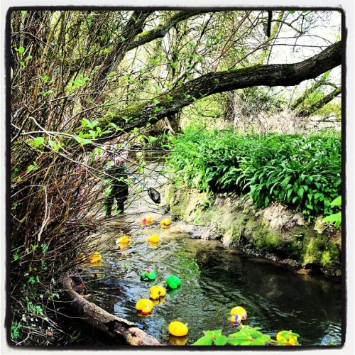 Our duck didn't do so well. (Second green duck). #plaxtolduckrace