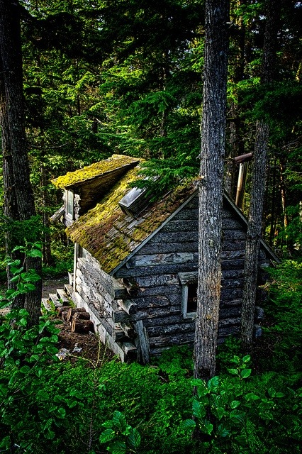 Forest Cabin, Girdwood, Alaska photo via jen