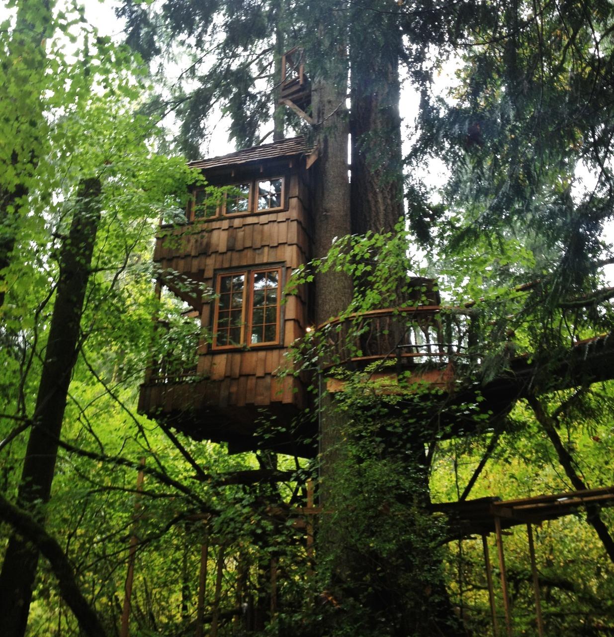 Washington architecture forest my photos treehouse WA pnw ...