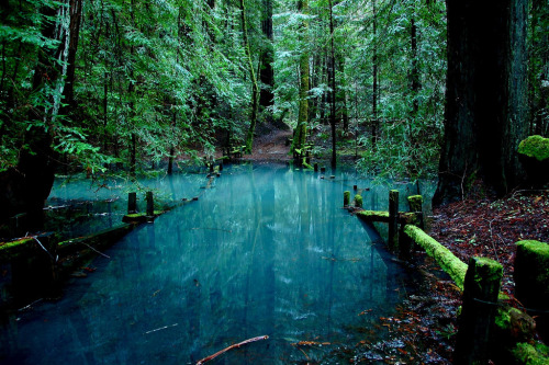 woodendreams:  (by mclyte04)  Oh my god, I don't live here anymore!