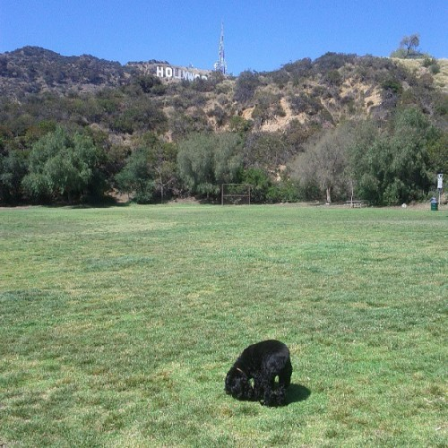 It's beautiful out and we're the only ones at the dog park.