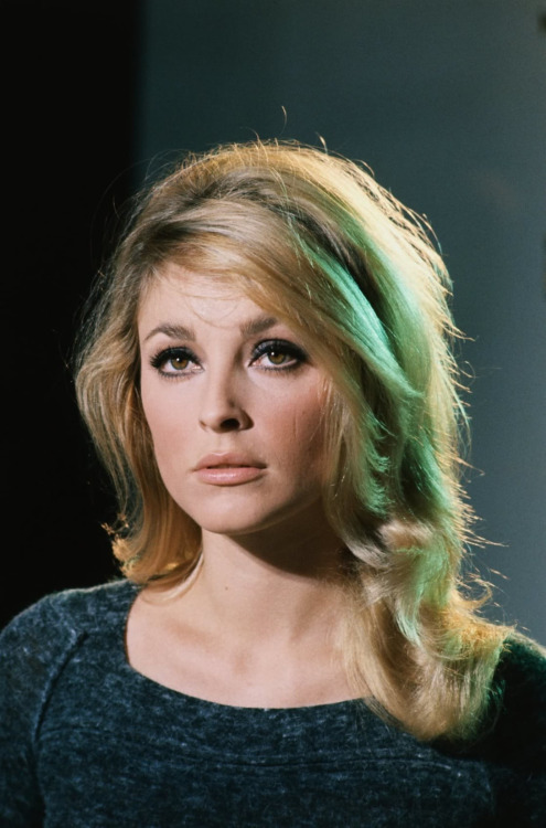 Sharon Tate-1965 #sharon tate#60s#60s aesthetic#60s model#60s style#60s beauty#vintage