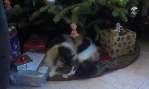 get out of there cat. i don't think you'd make a good present.
