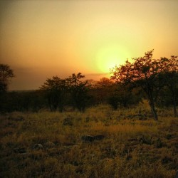 #tbt South African sunset in the bushveldt, Boulders bush camp, Kruger national park, August 2006