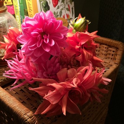 the-dahlias-say-thank-you-for-bringing-me