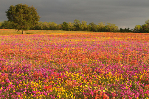 I wanna run through a field of wildflowers…
