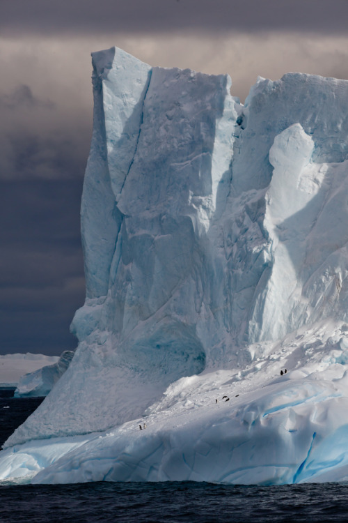 vurtual:  The Berg (by Daren Bledsoe)Icebergs, heading towards Paulet Island Antarctica