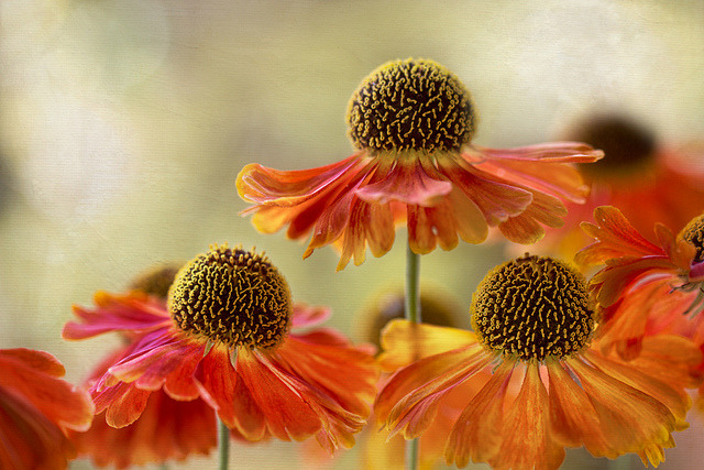 kissmegray:  Photo by Mandy Disher