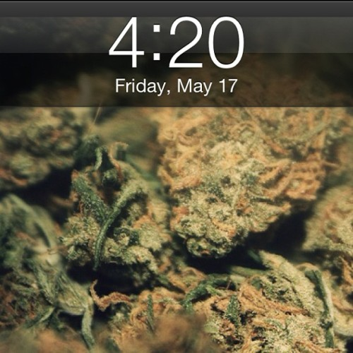 weedporndaily:  Happy 4:20