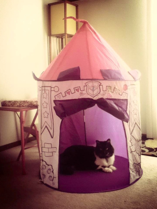 Prince Monroe & his castle. My cat is too high maintenance.