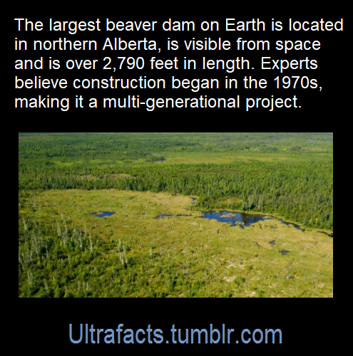 ultrafacts:Source: [x]Click HERE for more facts!