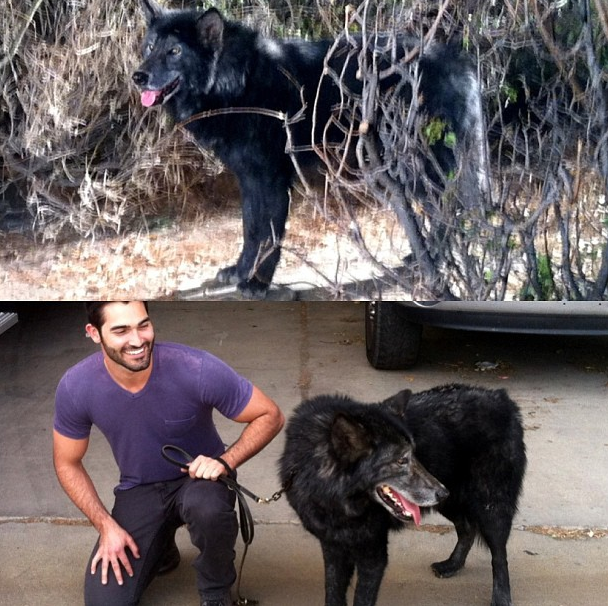 #animals make hoechlin smile  #hoechlin makes animals smile, too