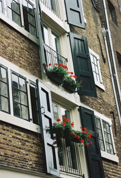 naturae:  Windows of Amsterdam (by Nastasiya-k)