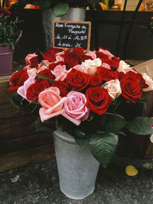 gypsyone:  Paris roses
