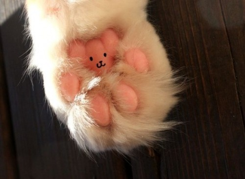 dirty-kitten-from-mars:  Teddy Bear in The Paw! =^.^=