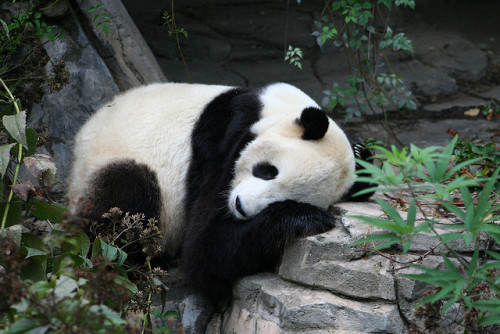 haveueverlovedawoman:  Tai Shan 09070903 by bearlycivilian on Flickr.