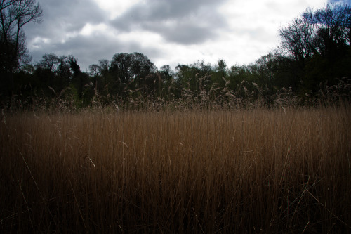 In amongst the reed bed, Dibbinsdale Nature Reserve