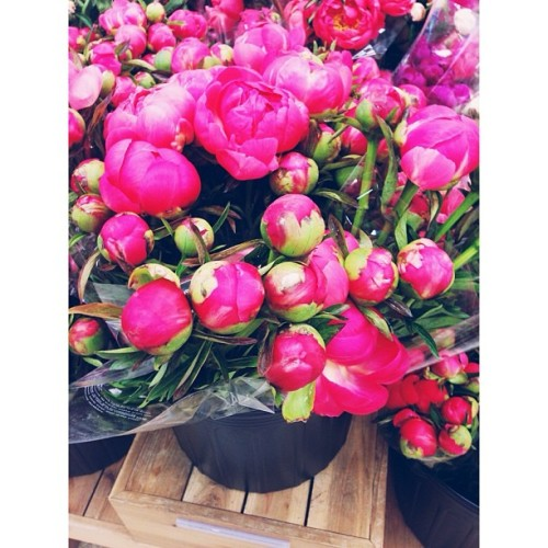 The simple things. #flowers #peonies #spring #iwantthewholebucket