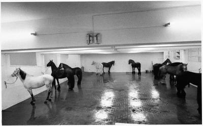 Jannis Kounellis, Untitled (12 Horses), 1969   In January 1967 Kounellis organized a solo exhibition in Rome at L'Attico, directed by Fabio Sargentini, where he exhibited twelve live horses. He relates that he was inspired by a phrase by André Breton in Le surrealisme au service de la revolution, according to which something could happen that was as impossible as the Tartars bringing their horses to drink at the fountains of Versailles. This led him to bring horses into the space of a private gallery, with all its economic and social connotations, with the stated intention of creating a radical tension, a cut in communication and in the tradition enjoyment of art. With their uncontrollable and vital presence, the horses intimidate viewers, forcing them into a situation of passivity and uneasiness. Above all, they physically condition the neutral space of the art gallery, to the point of altering its meaning and raising doubts about its perceptual structure. From an anonymous and abstract place, tied to intellectual activity, the gallery becomes a concretely real space, open to stimulating all the senses. (via)