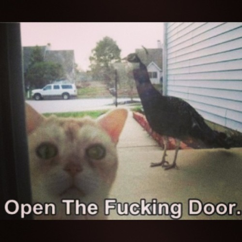 Would be my exact reaction…   #ornithophobia #fearofbirds #birds