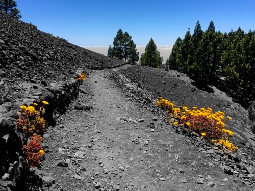 Color highlights the stark landscape outside El Pilar on La Palma.Photo: Meghan Hicks