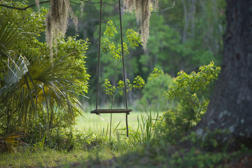 intracoastal-wanderings:  Old tree swingChisolms, SC
