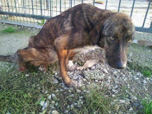 jotter-journal:  we need a foster in europe for this dog immediately. we got her off the streets, but the vet said she will never be able to use her back legs. the clinic cannot care for her for much longer. if anyone can help, please contact me. thanks.  the admin will know the name of the clinic. she is off of the streets, but the clinic cannot care for her long term. she needs a foster in turkey or europe right away. we are going to raise funds through an auction for her wheelchair and transport to a forever home, if we can find someone who can handle the responsibility.https://www.facebook.com/#!/groups/137949369697560/    Follow me on my journey for the animals :  Tumblr :     http://jotter-journal.tumblr.com/ Facebook:  http://www.facebook.com/jotterjournal Twitter :    https://twitter.com/#!/Jotter_Journal                                                       With Love, Jotter-Journal