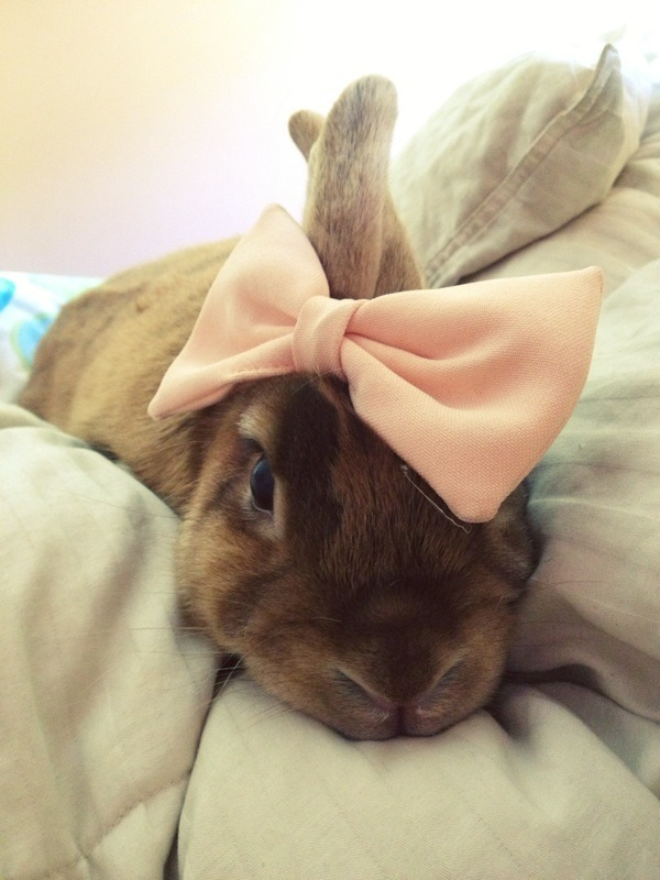 wxng:  frozenly:  isn't my bunny so cute  yes