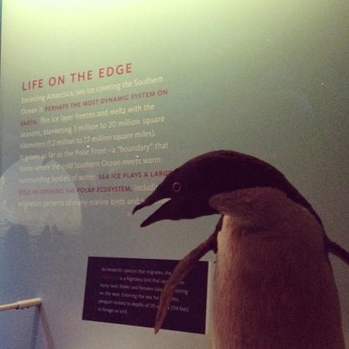 This penguin and I have a lot in common. #livingontheedge