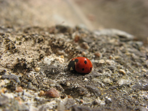 Ladybug! They have become so uncommon, that everytime I see one now, I squee of happiness.