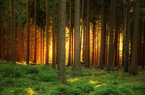 Great Woods, Narnia Earth: near Werda, Vogtland, Saxony, Germany